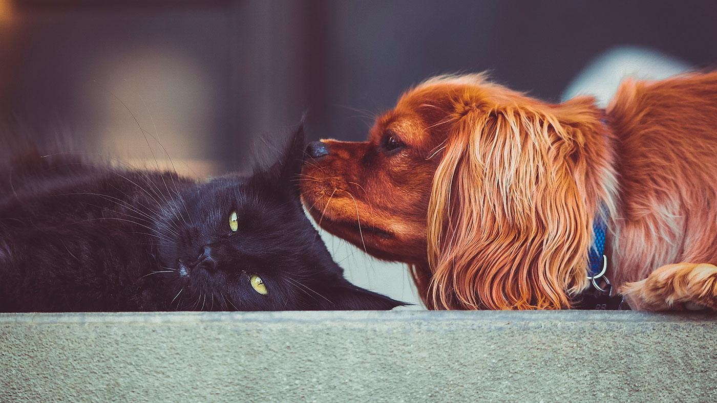 10 perfis no Instagram para quem gosta de animais